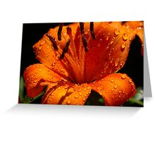 Orange Tigerlily Greeting Card