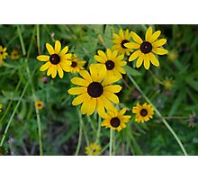 More Yellow Flowers Photographic Print