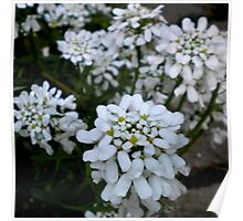 White Frosty Flowers Poster