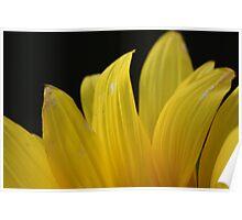 Sunflower 1361 Poster