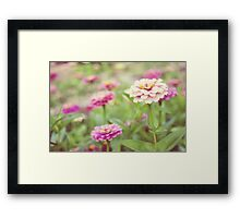 Zinnia patch Framed Print