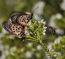 Butterfly Heaven by Cheryl Westerdale