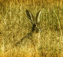 """A Rabbit Called """"Jack"""" by Terence Russell"""