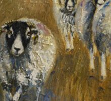 Stomping Swaledales Sticker