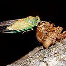 Cicada One by Tim Wright