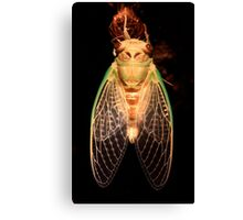 Cicada Two Canvas Print
