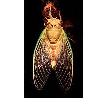 Cicada Two Photographic Print