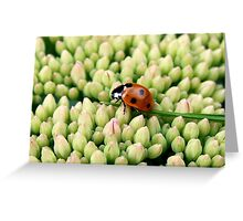 Lady at the bottom of the garden Greeting Card
