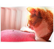 greetings fly how iz you?!? Poster