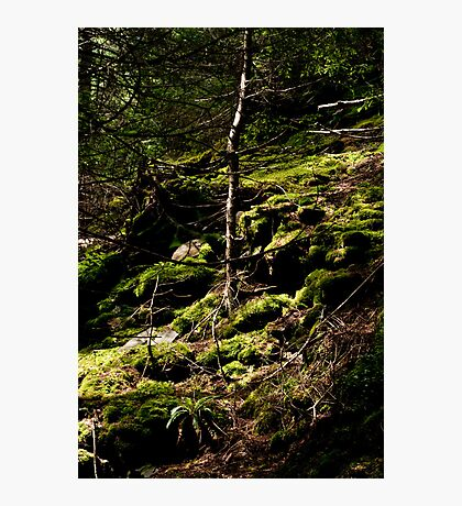 mossy Photographic Print