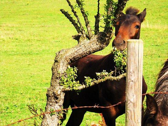Hidey Horse by Ladymoose