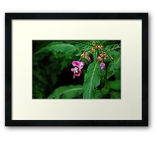 The Bee and The Lady's Slipper  Framed Print