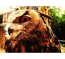 It`s a Hoot Photographic Print