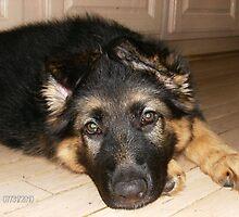 11 weeks old by vjmarro