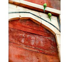 Green Parakeets at Red Fort Photographic Print