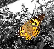 Vibrant Butterfly by Seth LaGrange