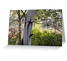 poplar grove Greeting Card