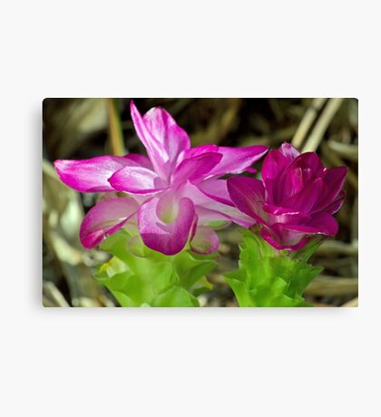 Cape York Lily Duo Canvas Print