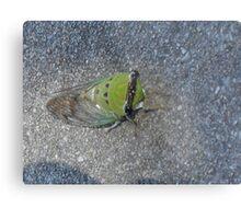 Sick Cicada Metal Print