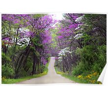 Redbuds in Bloom Poster