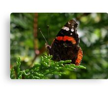 Red Admiral Butterfly (folded) Canvas Print