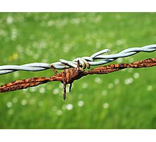 Still Life with Barbed Wire Photographic Print