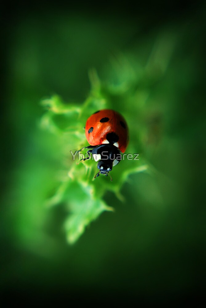 Ultra Electro Magnetic Single Ladybug by Yhun Suarez