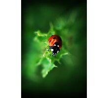 Ultra Electro Magnetic Single Ladybug Photographic Print