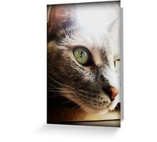 """close up of a """"serious"""" cat Greeting Card"""