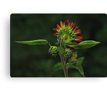 The Other Face - Sunflower Canvas Print