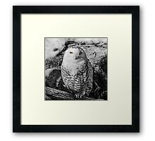 Snowy owl with stunning eyes Framed Print