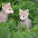 Cute pair  by Daniel  Parent