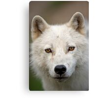 Steely eyed Stare Canvas Print