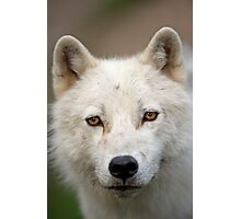 Steely eyed Stare Photographic Print