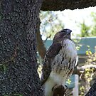 Watching you like a HAWK by Missy Yoder