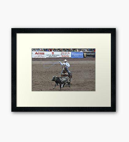 Steer Roping Pikes Peak or Bust Rodeo Framed Print