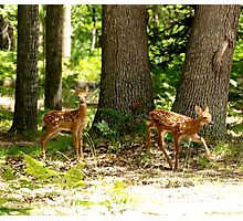 Fawns at Play Photographic Print