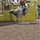 Bull Riding 1 Pikes Peak or Bust Rodeo by hedgie6