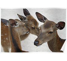 Three Kissing Deer Poster