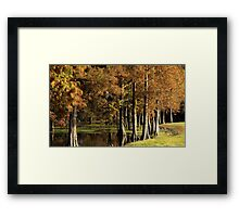 Cypress Pond Framed Print