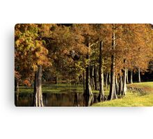 Cypress Pond Canvas Print