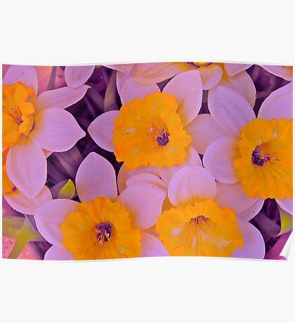 Flower III Poster