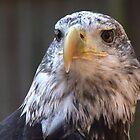 The Birds of the Carolina Raptor Center by Lolabud