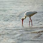 Ibis by Mark de Jong