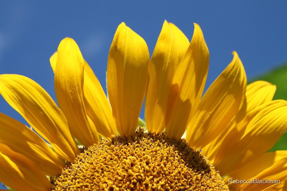 Reach For The Sun by RebeccaBlackman
