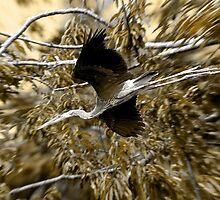 Great Blue Heron Fledgeling by David Friederich