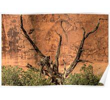 Southwestern Tree Art Poster