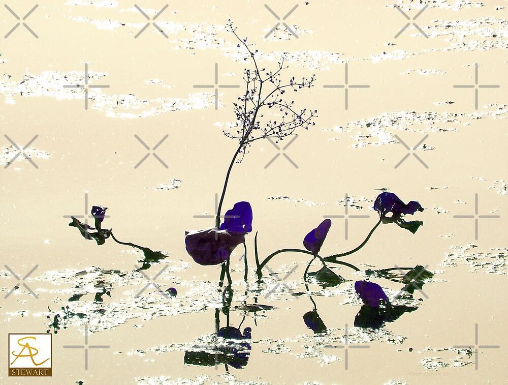 Blue Lily by AlbertStewart