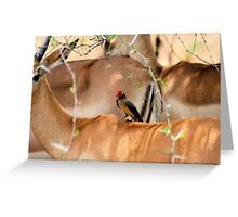 RED-BILLED OXPECKER AND THE IMPALA -A combination of Textures Greeting Card