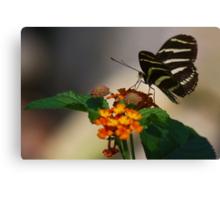Zebra Longwing Butterfly Profile Canvas Print